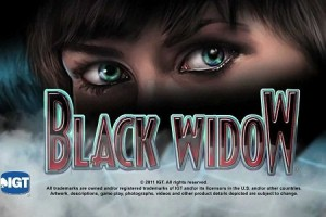 Schwarze Witwe im Online Casino